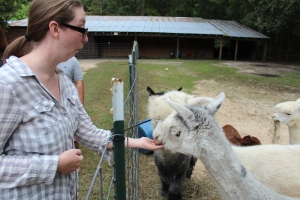 Feeding an Alpaca Feels Weird!