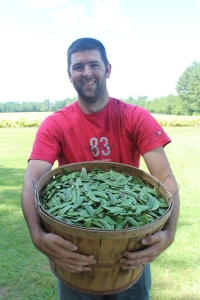 Picked a Bushel of Beans in a Friend's Garden