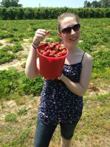 Picking strawberries  at a local u-pick farm