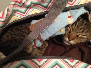 Digit sleeping in bag