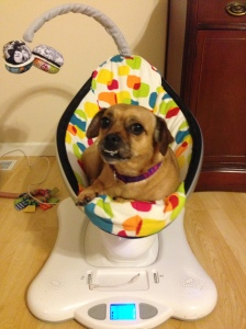 Ok, I actually kind of like this thing. Humans call it a Mamaroo.